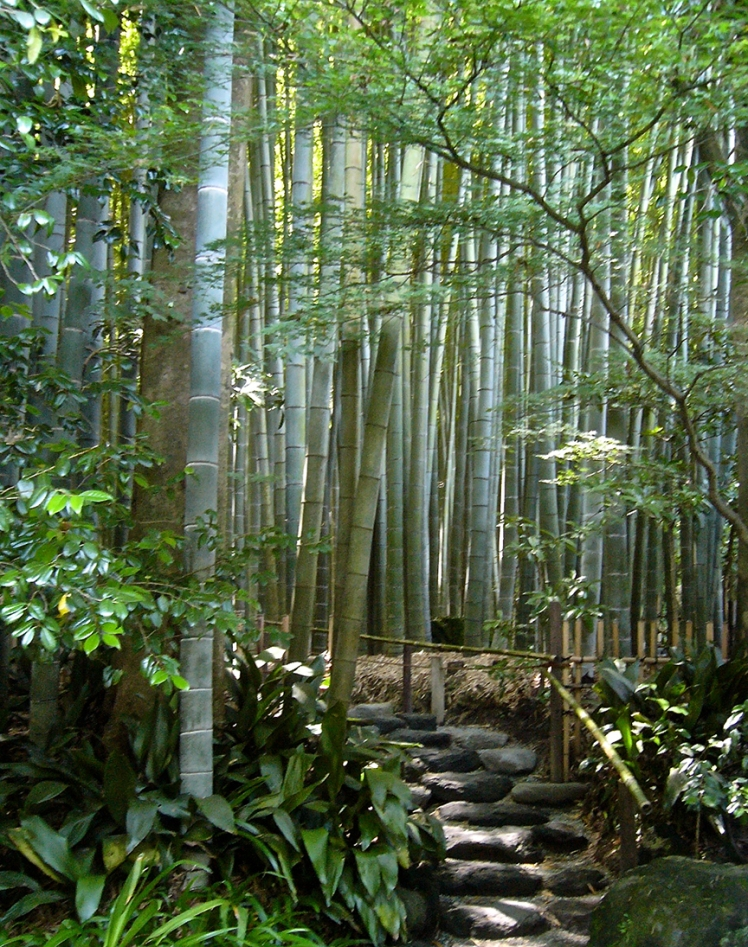BambooTemple