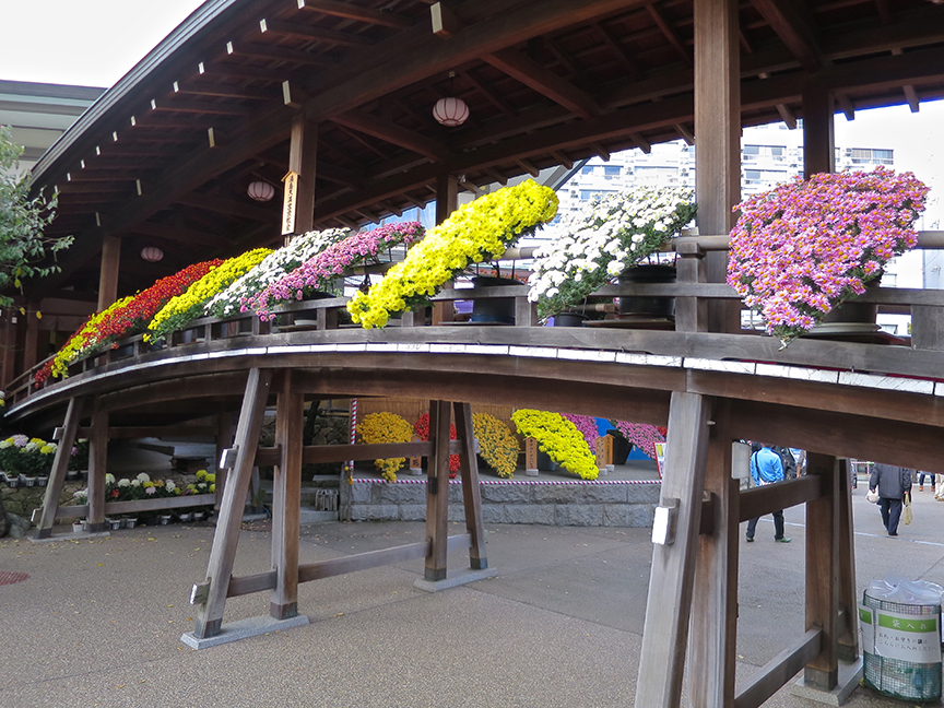 The bridge is laden with a special style of bonsai chrysanthemums that remind me of Elvis bouffants.