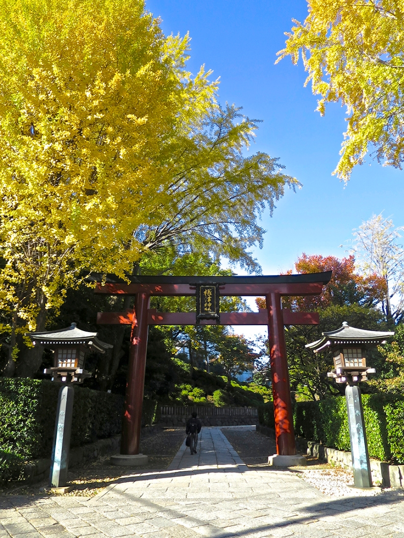 In the fall, the Japanese maples turn brilliant red and the gingko trees become towers of gold.