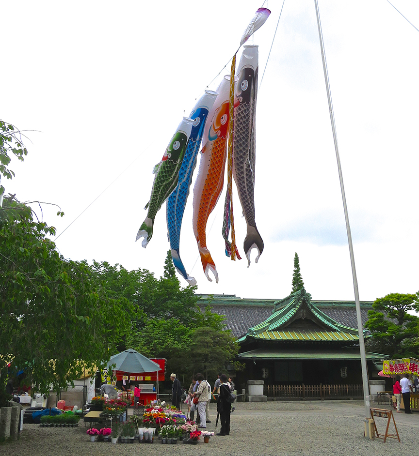 Nishiarai Daishi is a full-service Buddhist temple that has great festivals year-round. These giant carp flags are flying from mid-April to May 5th, for Childrens' Day.