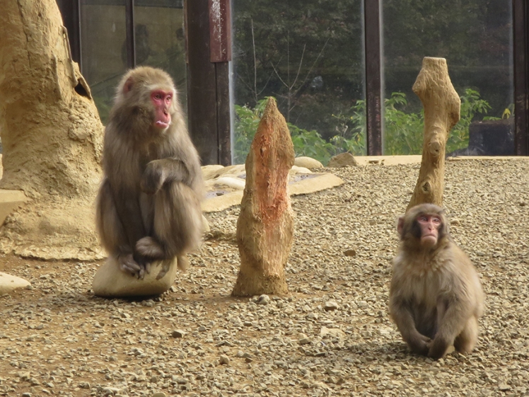 There's a nice monkey park at the top.