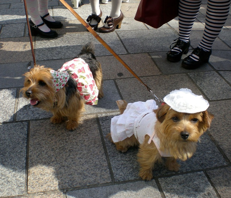 Even the dogs are decked out in fine Lolita style on Takeshita Street!