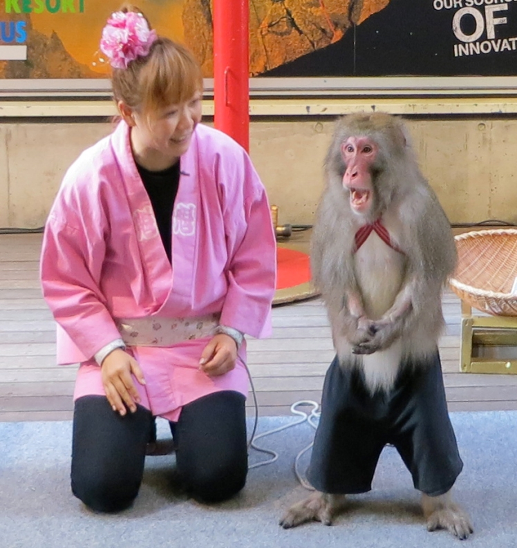 On festival weekends, you can often catch a free monkey show at the Yushima Shrine.
