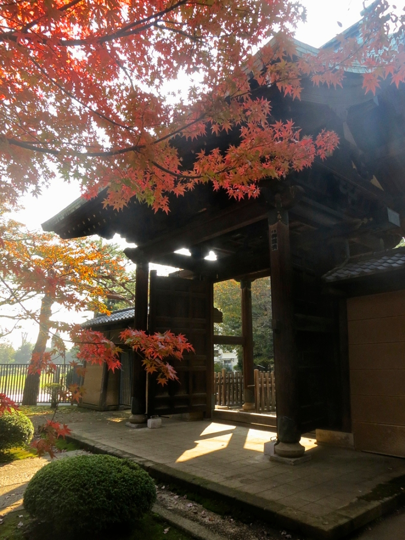 The grand gate of the temple is framed by beautiful Japanese maple leaves in autumn.