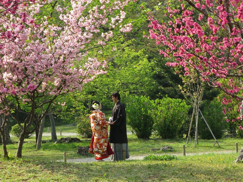 May brings peach blooms and many couples posing for their wedding pictures.
