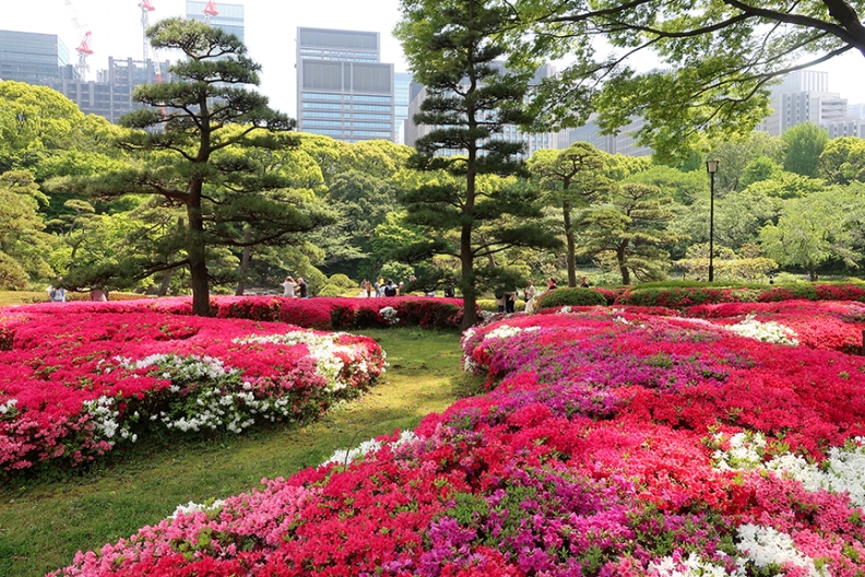 Azaleas in full bloom at the Ni-no-Maru imperial palace gardens