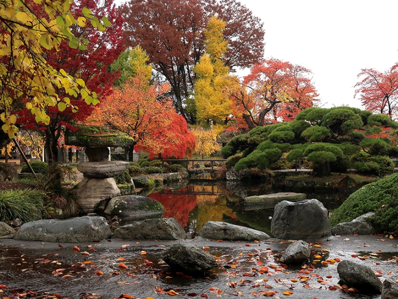 Japanese garden with autumn leaves