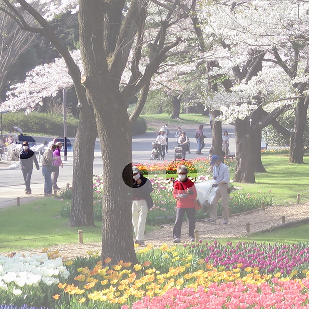 Highlighted mask-wearing people walking in Showa Kinen Park with tulips and cherry trees