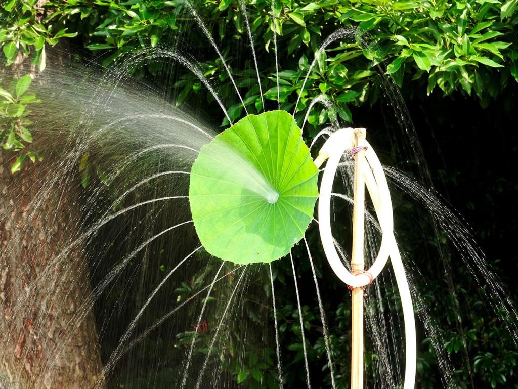 Lotus leaf spraying water