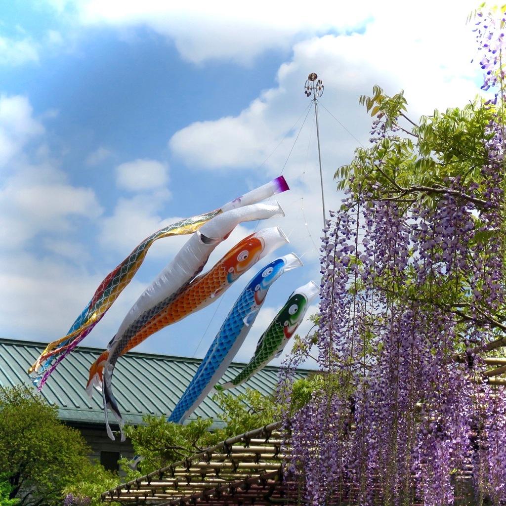 Koi nobori fish flags flying at Nishiarai-daishi temple