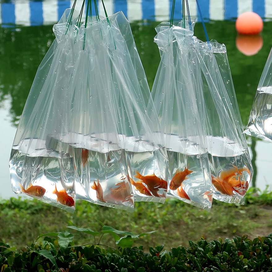 Photo of goldfish in bags of water at the Edogawa Goldfish Festival in Japan